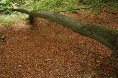 fallen tree for balancing exercise