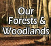 Our forests & Woodlands